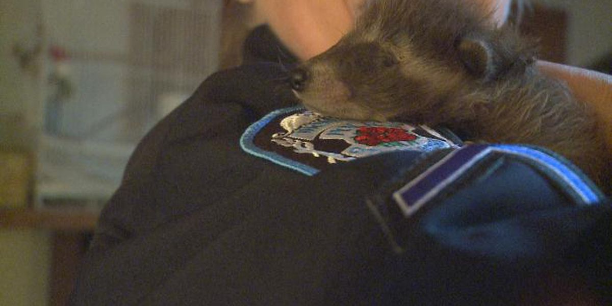 Thomasville police rescue baby raccoons, collect donations for local refuge