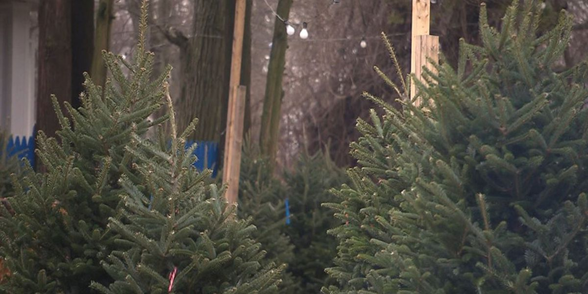 Millennials are buying more Christmas trees