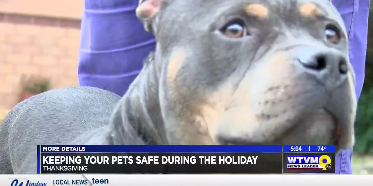 Keeping pets healthy during the Thanksgiving holiday