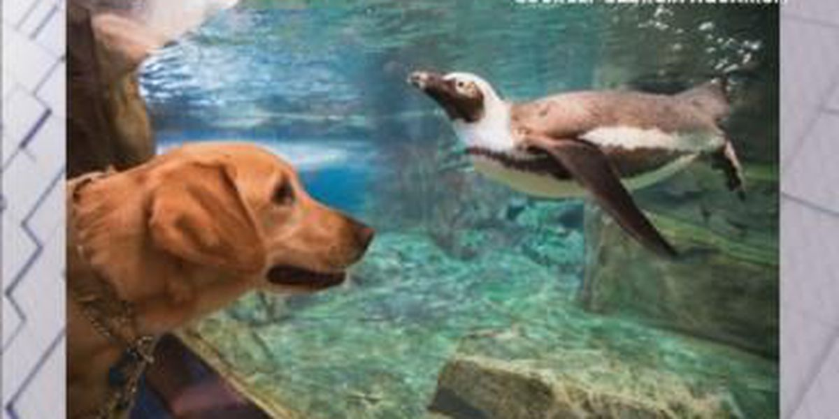 The Power of Goodwill: Service puppies visit GA Aquarium