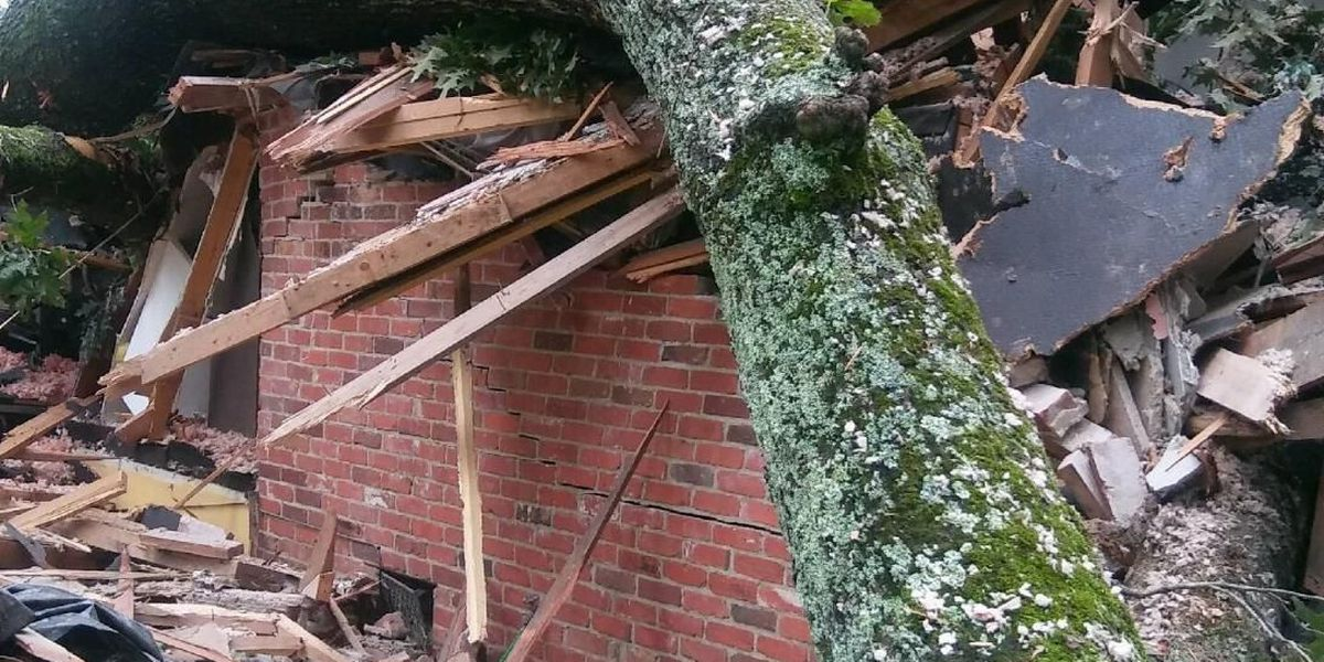 SLIDESHOW: Columbus home damaged from tree falling after Thursday's storm