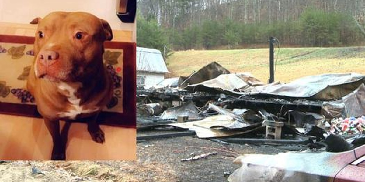'Hero' dog credited for saving family's life