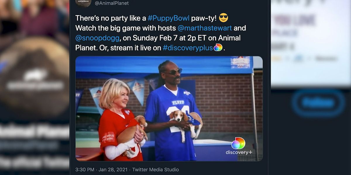 Snoop Dogg and Martha Stewart to co-host Puppy Bowl