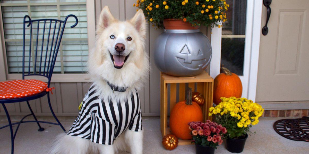 SLIDESHOW: HowlOween Pet Costume Contest