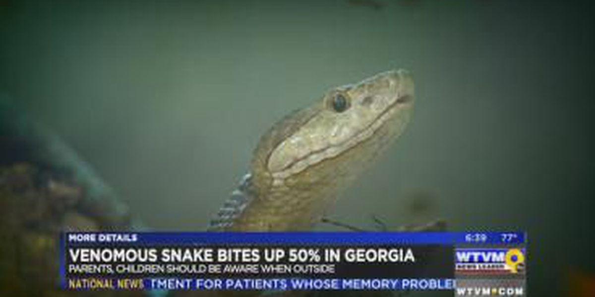 Venomous snake bites increase 50 percent in Georgia