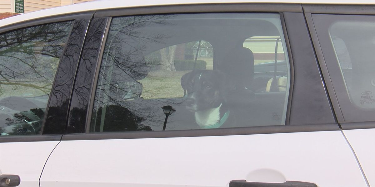 Proposed Ga Bill May Protect You Legally If Let A Dog Out Of Hot Car