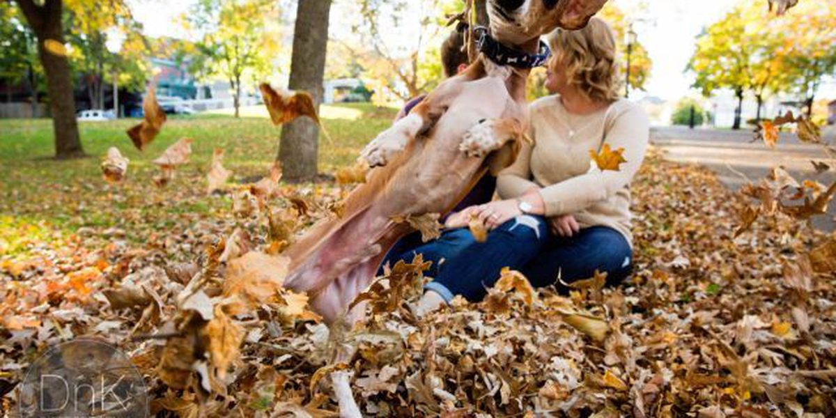 SLIDESHOW: Adorable dog photobombs MN couple's engagement photoshoot
