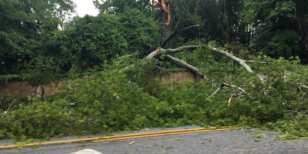 TRAFFIC ALERT: Large tree blocks lane of traffic on Macon Road