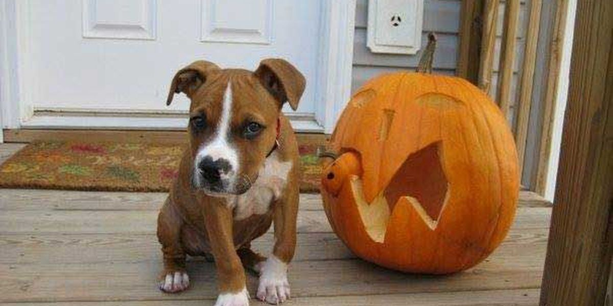 Monday is #NationalPuppyDay - send us your pictures!