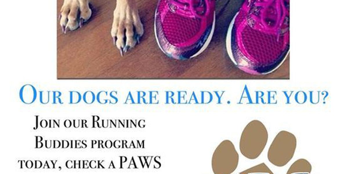PAWS Humane requesting participants for their 'Running Buddies Program'