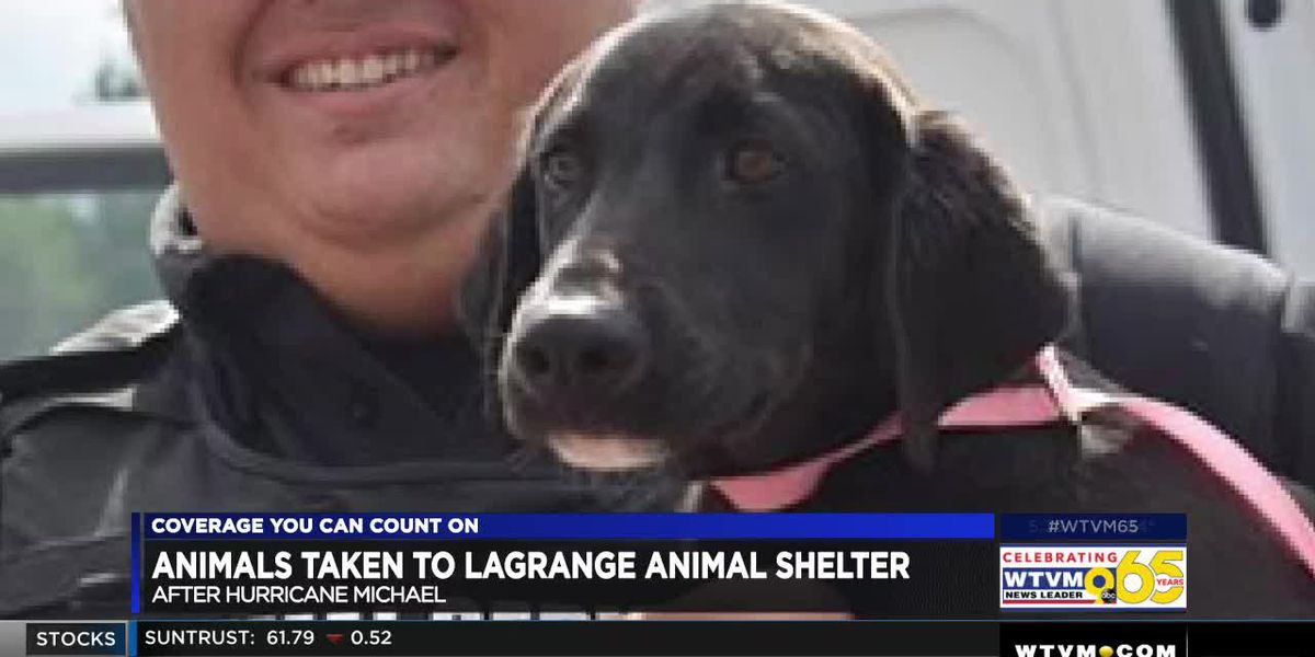LaGrange takes in dogs from Albany following damage from Hurricane Michael