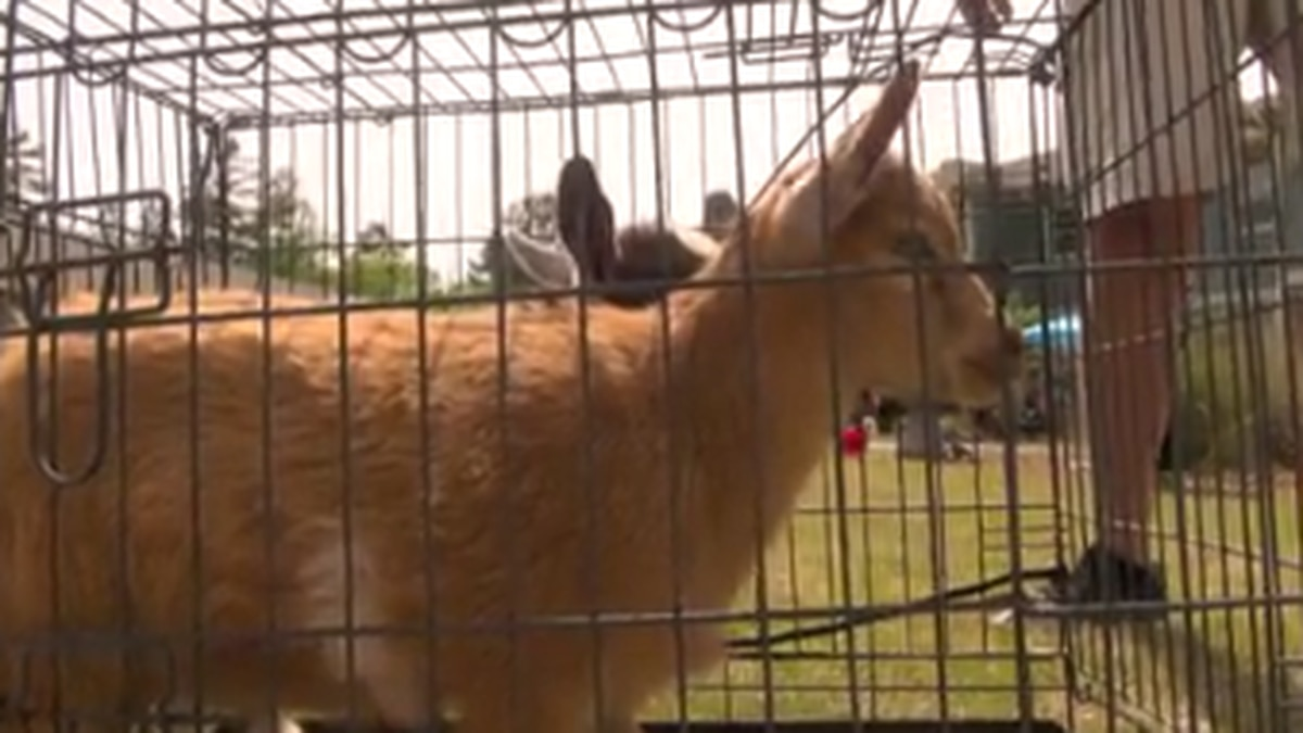 Residents at assisted living facility in Columbus enjoy Furry Friends Day