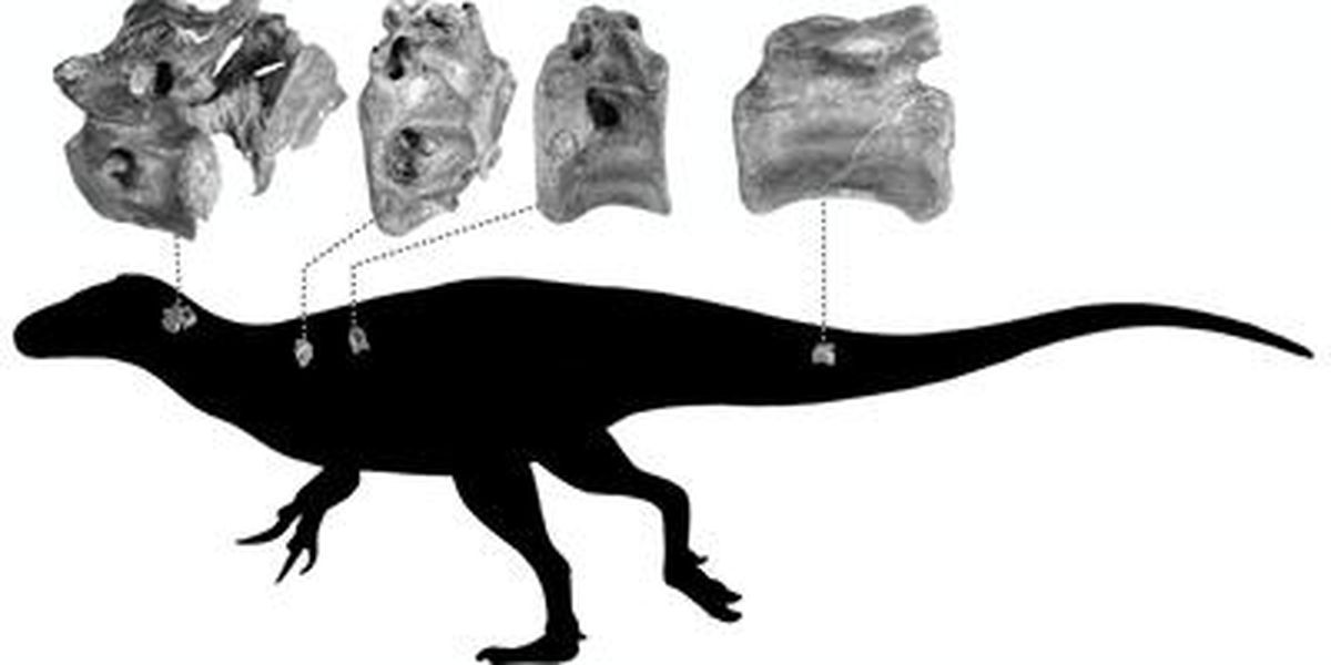 New species of dinosaur discovered by scientists