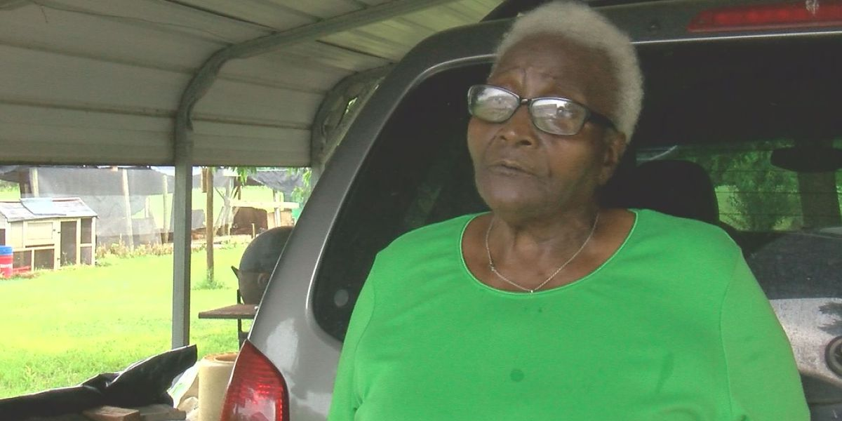Colossal Collards: Americus woman grows abnormally large crop