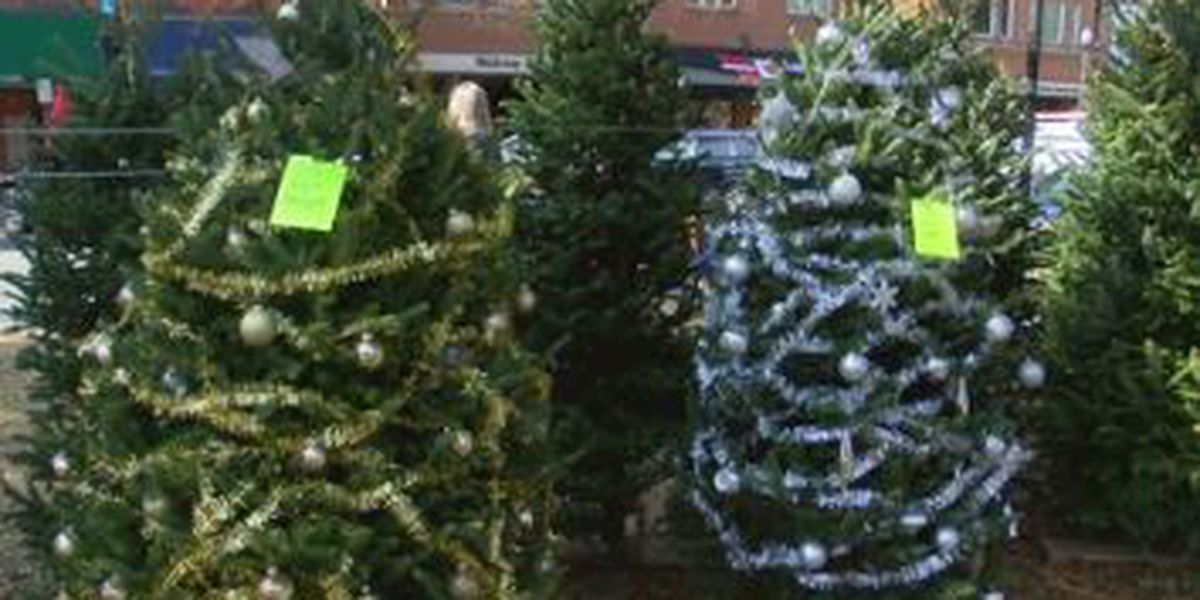 Uptown Tree Trail in Columbus presents decorating for a cause