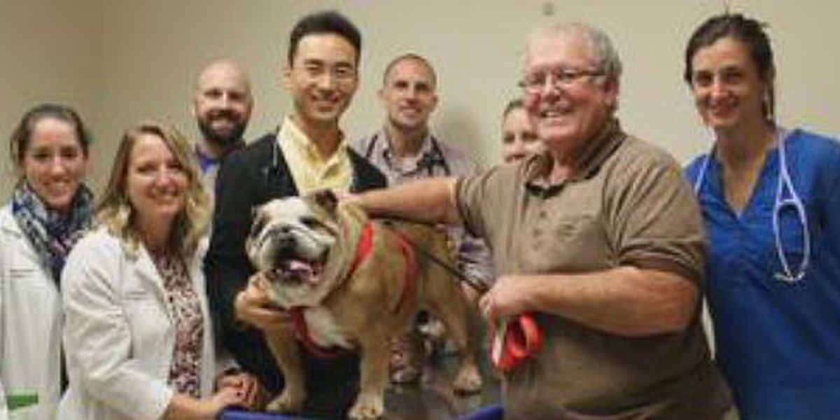 Dog undergoes first of its kind surgery at AU