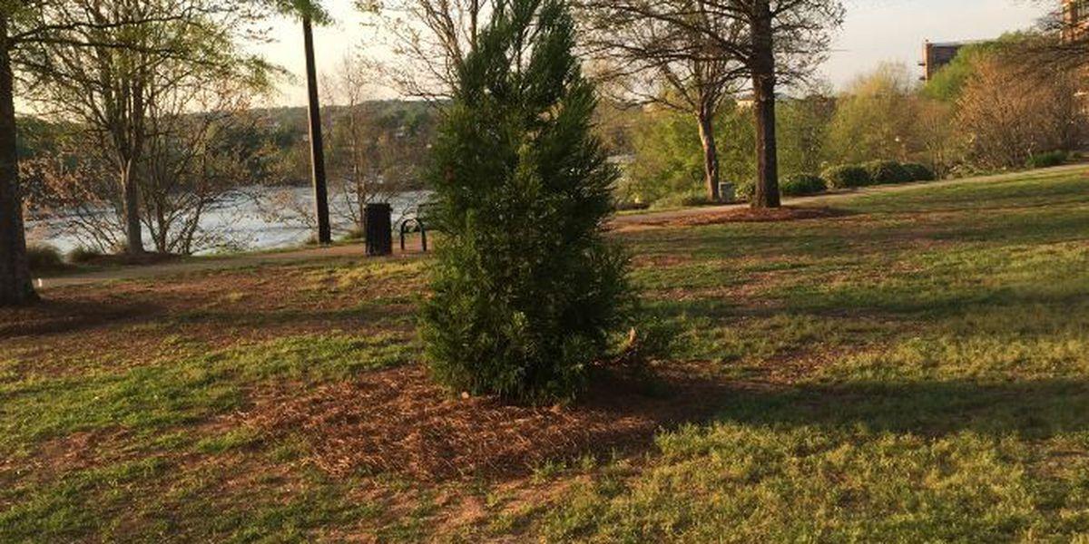 Best Buddies tree-lighting planned along Riverwalk