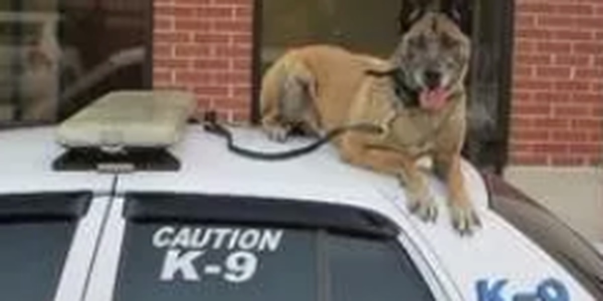 LaGrange police K-9 passed away following cancer diagnosis