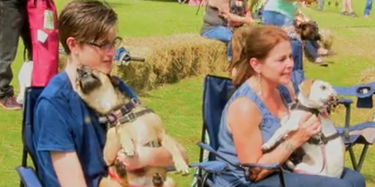 Barks and Blues Festival provides fun for furry family members