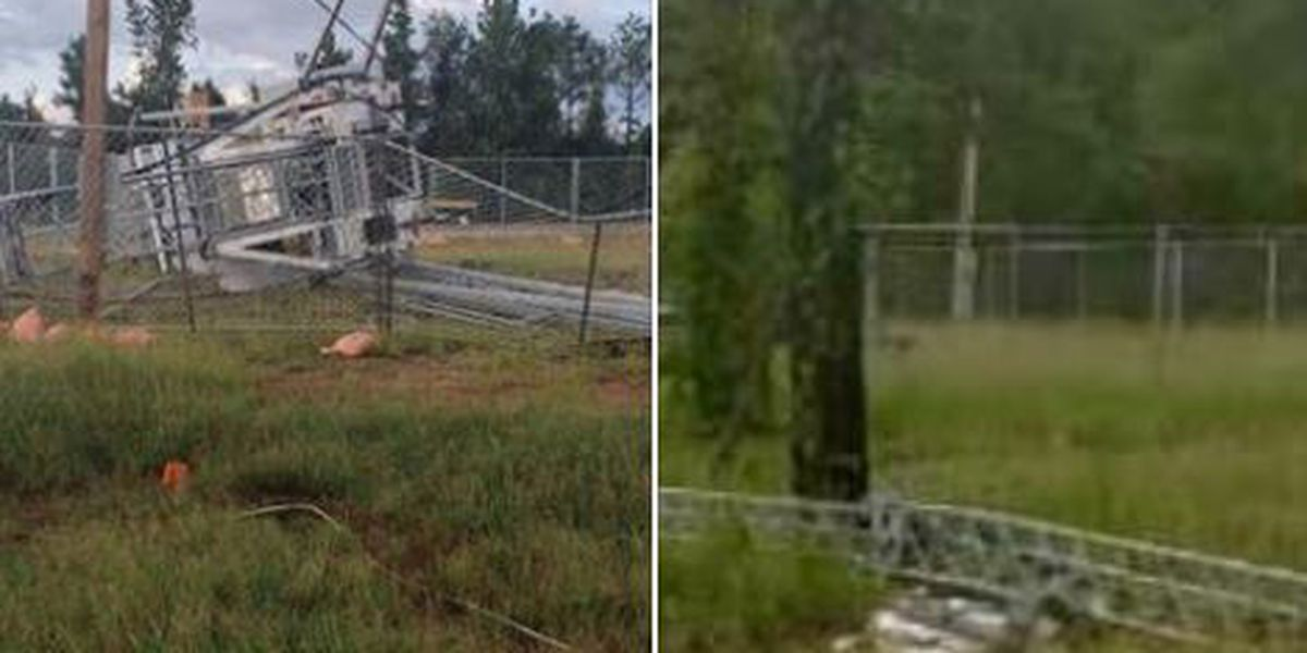 Storm leaves behind damage, downed trees in Lee County, Ala.