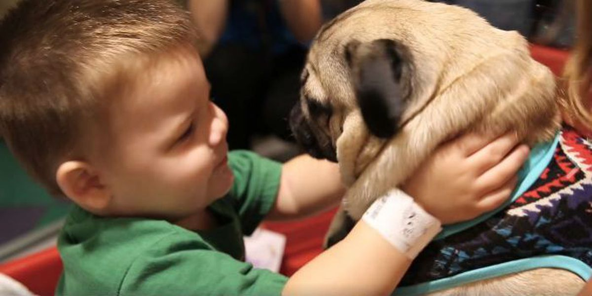Internet star Doug the Pug visits children's hospital in TN