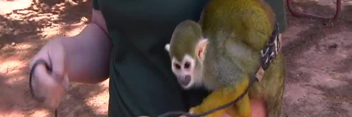 Wild Animal Weekend: Squirrel Monkey
