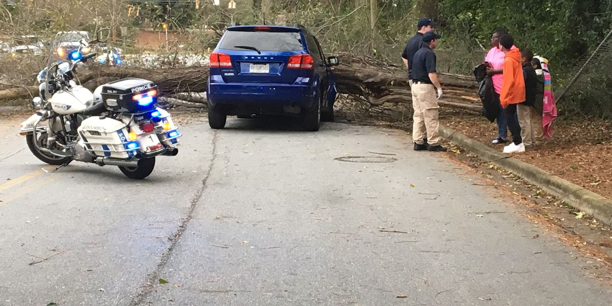 Section of Cherokee Ave. in Columbus blocked after tree falls on vehicle