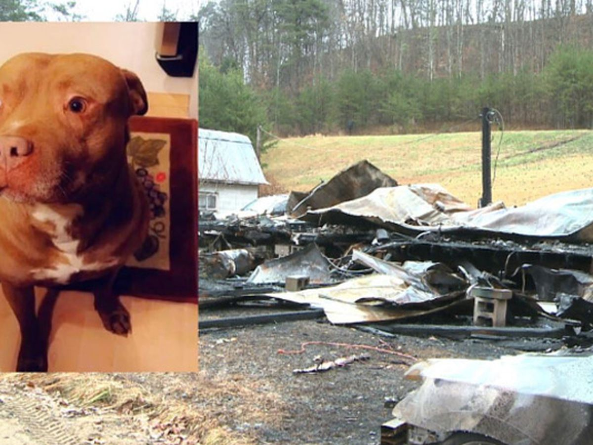 Hero pit bull dies in house fire after alerting family