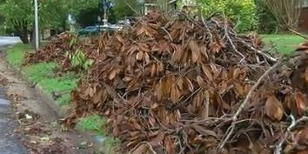 Columbus Public Works continues to pick up trees after Hurricane Michael