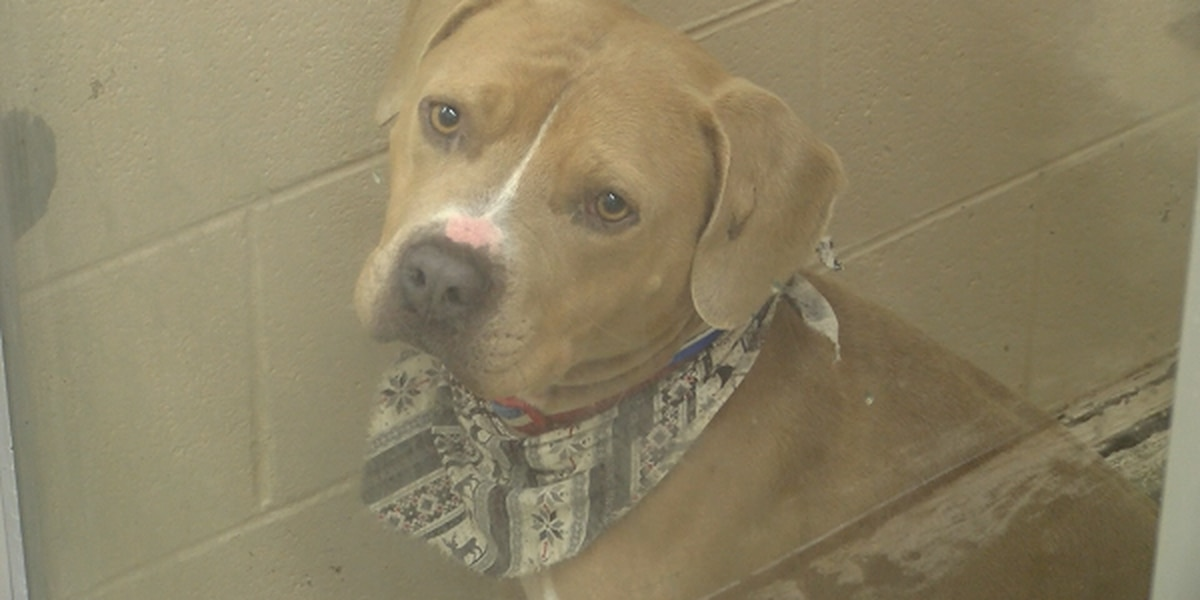 Local animal shelters full, need community's help