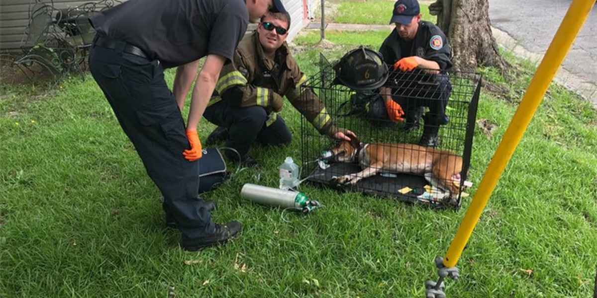 Dog injured in Columbus house fire recovers