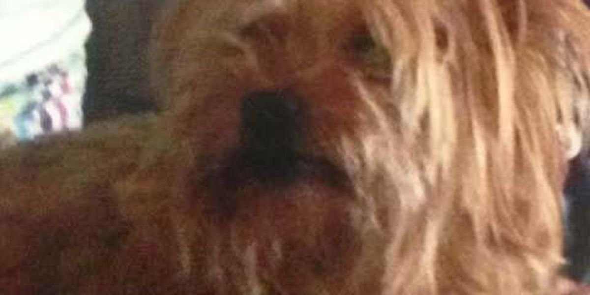 Dog reported missing after Columbus apartment burglary