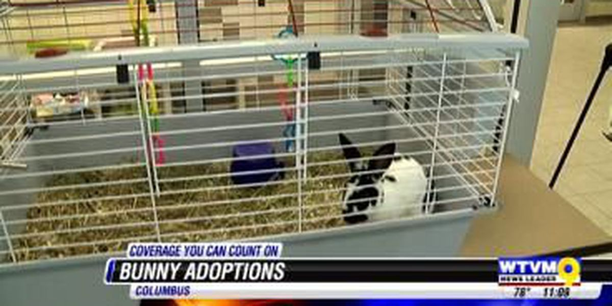 Paws Humane rabbits looking for new owners