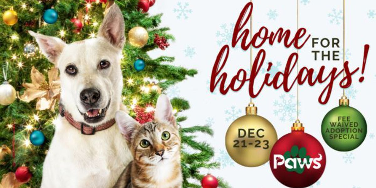 Paws Humane Society hosts holiday adoption special, waives fees