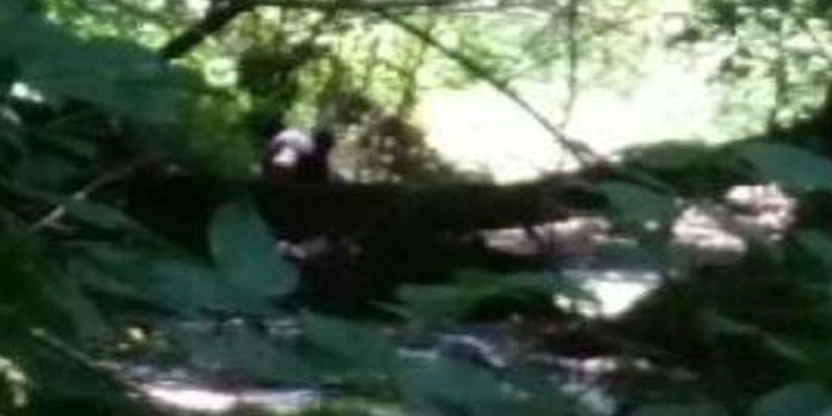 Black bear spotted in East Alabama on Monday