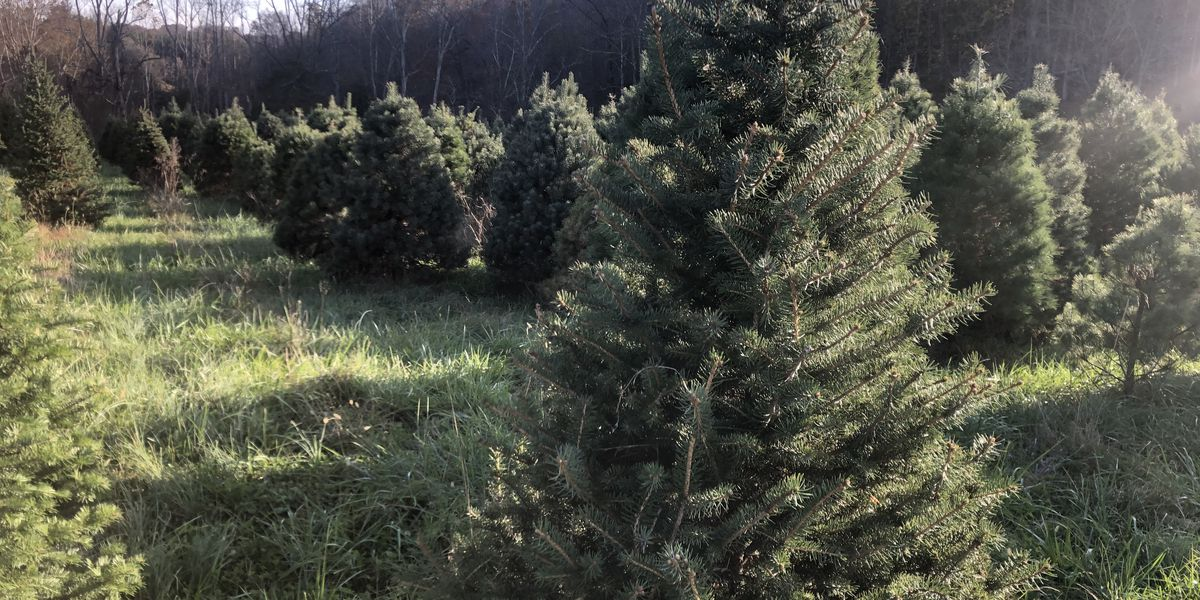 500 Christmas trees being donated to Fort Benning military families