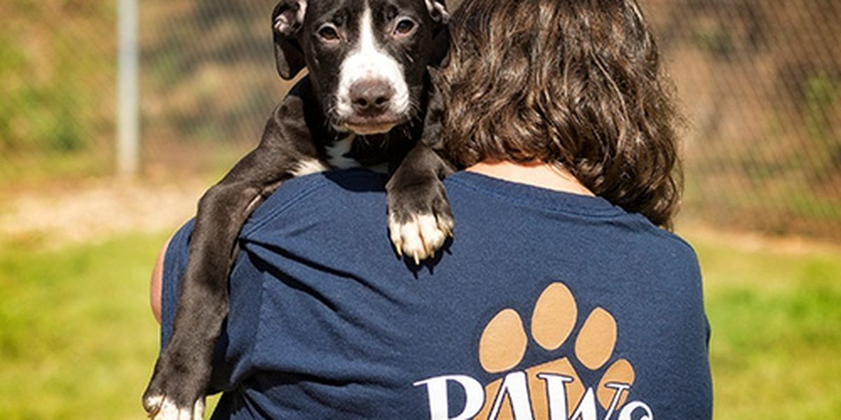 Paws Humane closed after exposure to someone with COVID-19