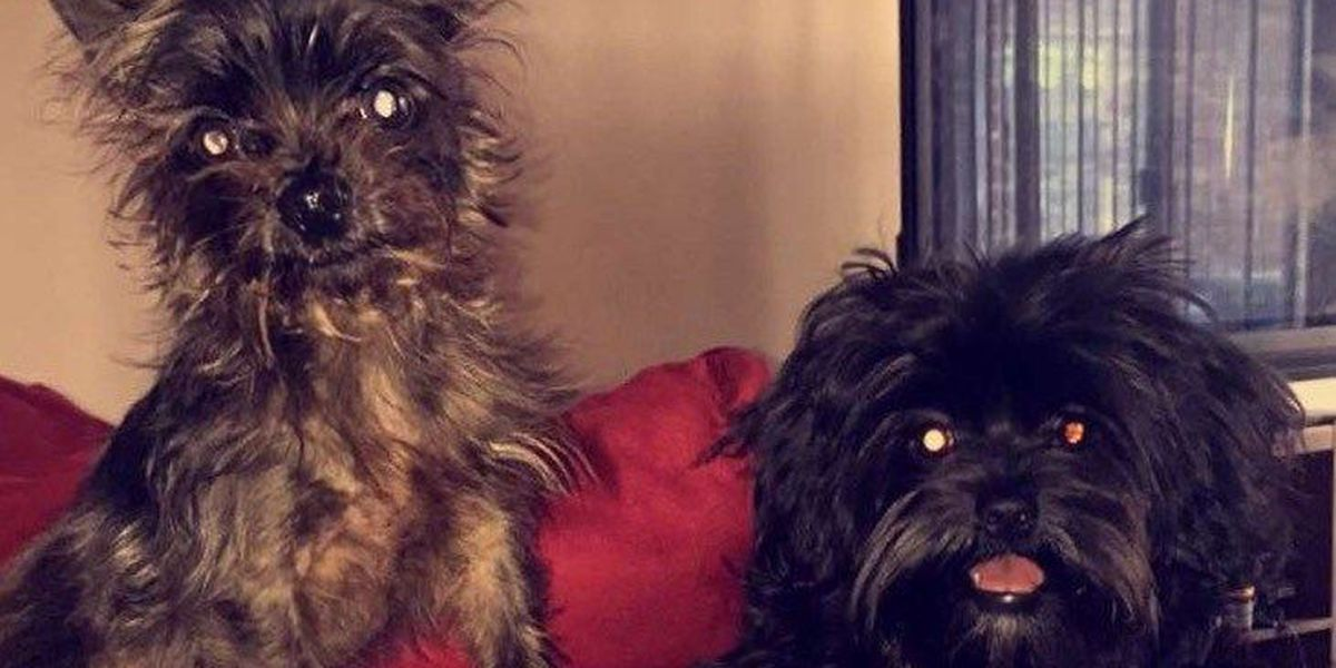 SLIDESHOW: National Love Your Pet Day