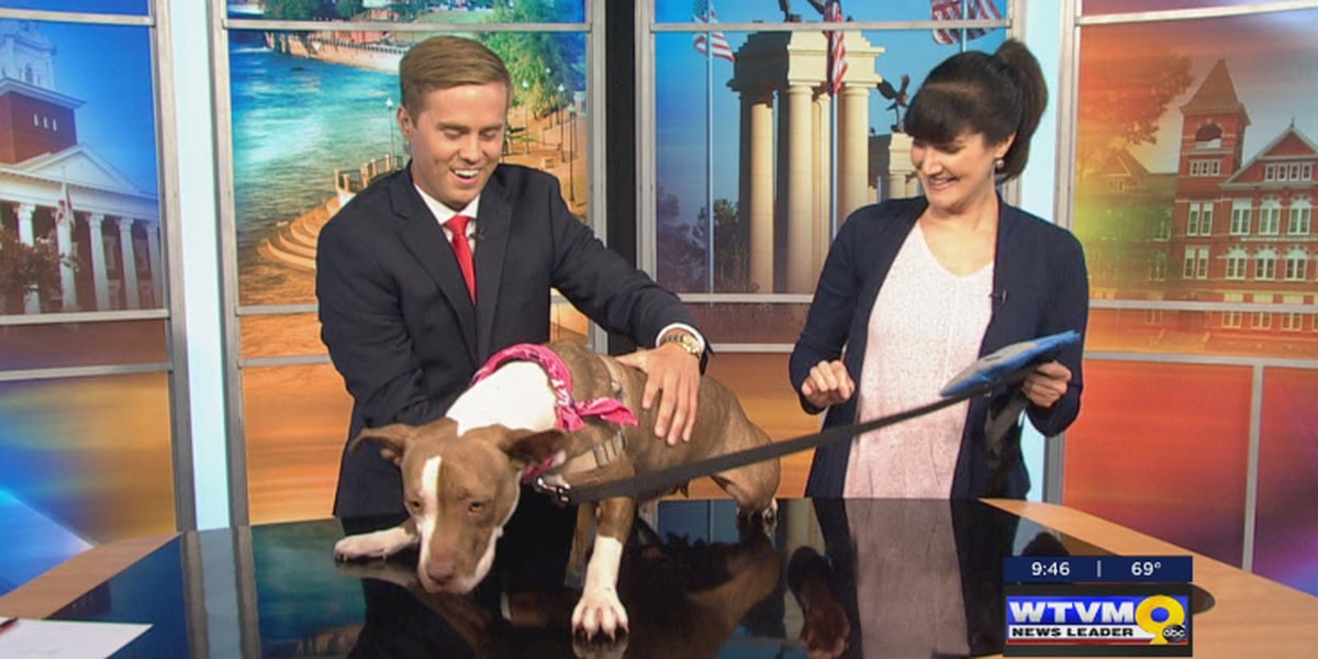SEGMENT: Labor Day adoption special at PAWS Humane