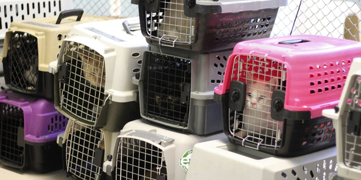 Lee Co. Humane Society takes in more cats following hoarding situation in Opelika