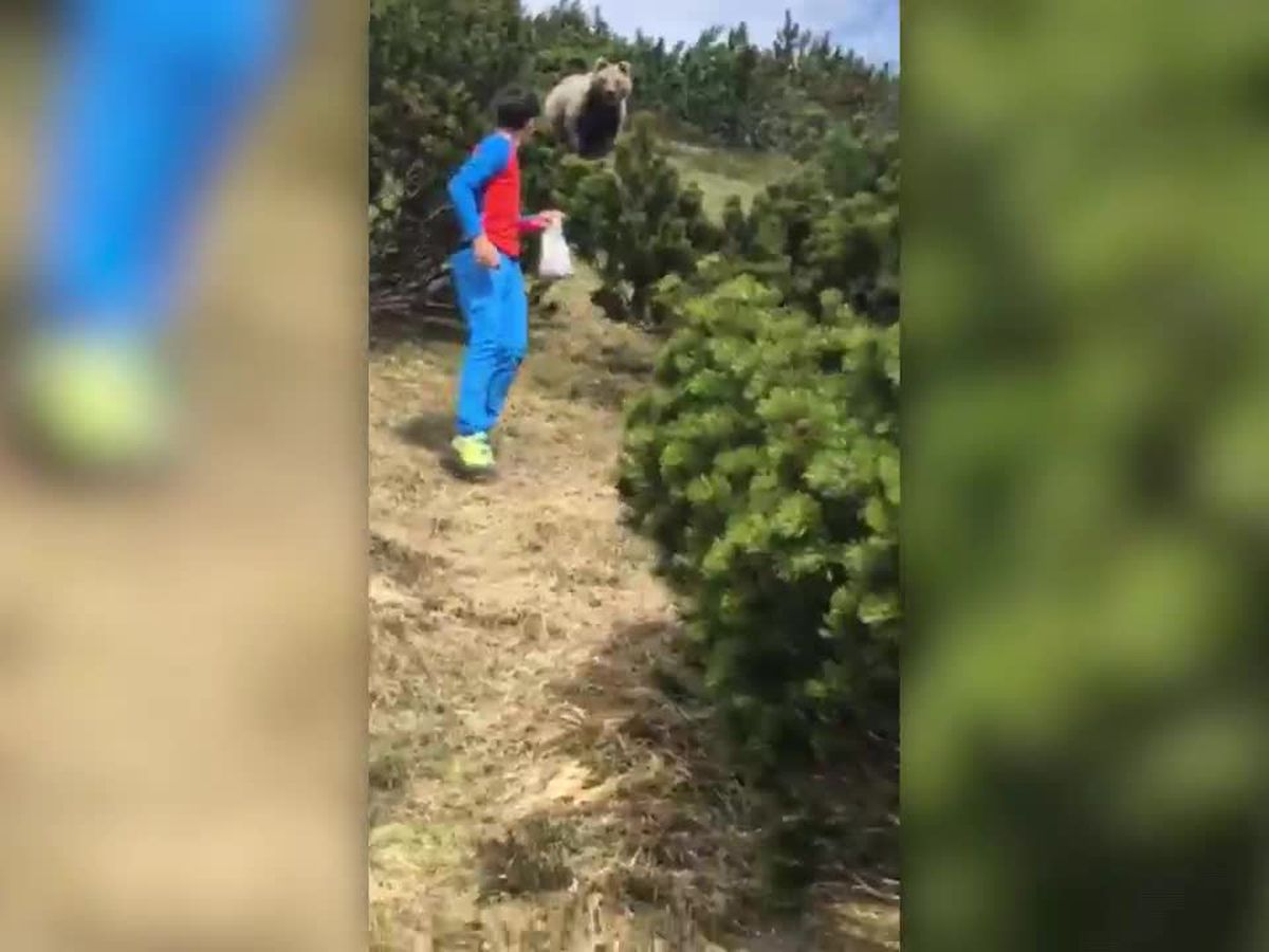 WATCH: Bear follows boy through mountains of Italy