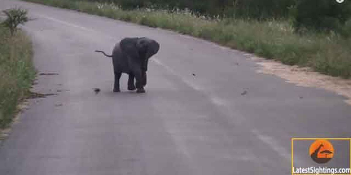 Daily pick-me-up: Watch this baby elephant happily chase birds