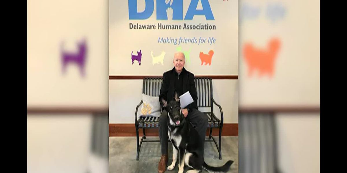 2020 walking or running mate? Former Vice President Joe Biden adopts German Shepherd from animal she