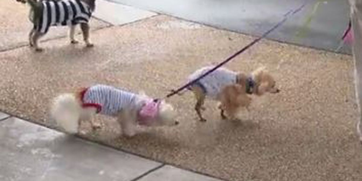 Columbus Hospice hosts Spookie Pooch Parade for community members and patients