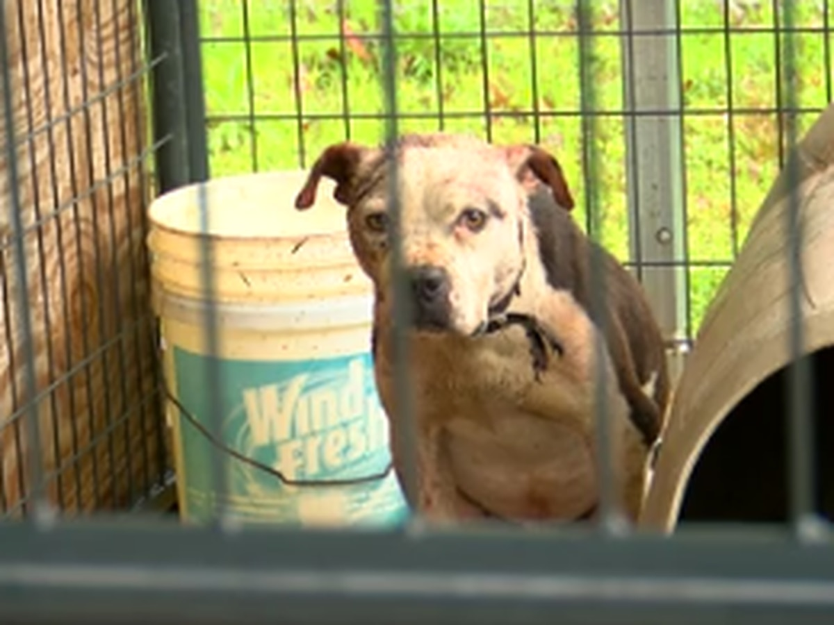 Animal rescue organization needs help giving mistreated Talbot Co. dogs new homes