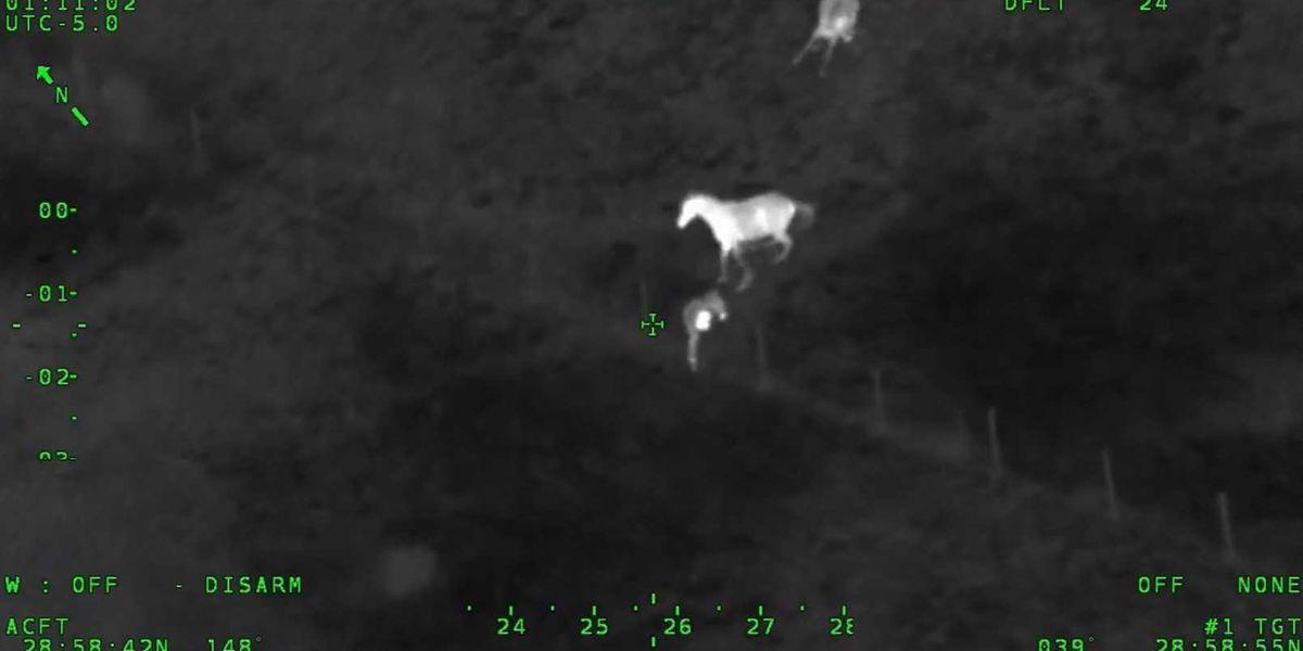 Video: Horses chase man fleeing from Florida deputies