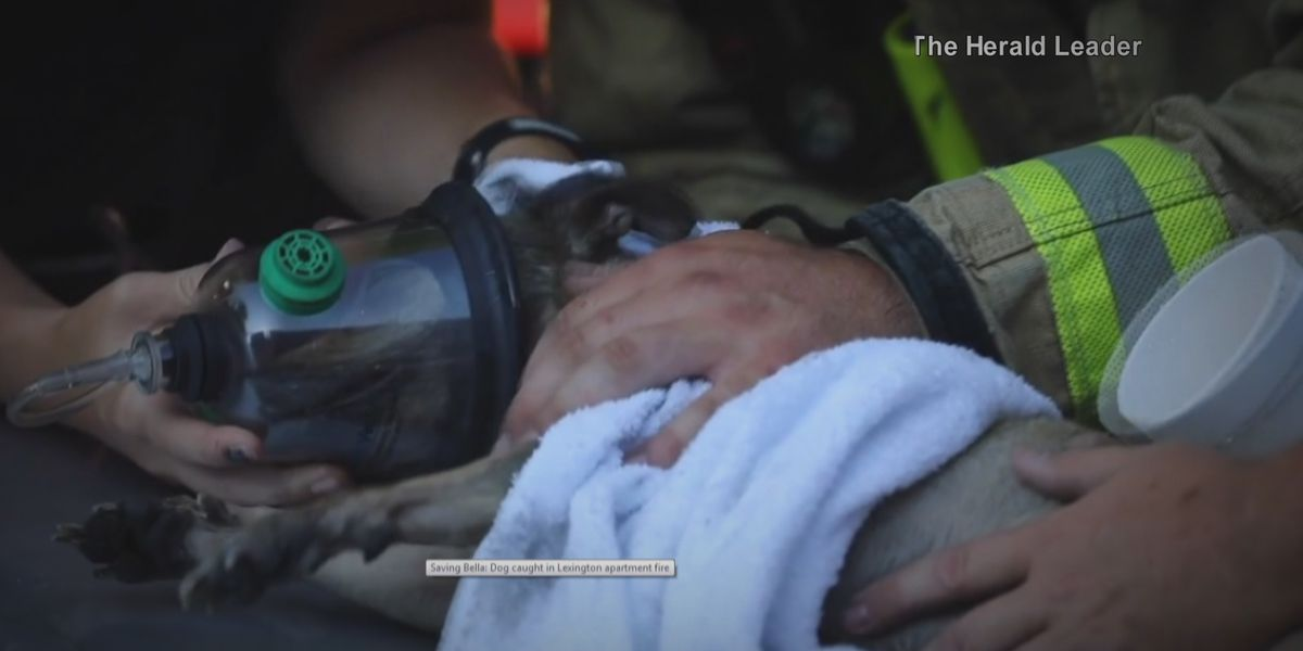 'If it saves one pet, it's worth it': First responders using new oxygen masks for animals