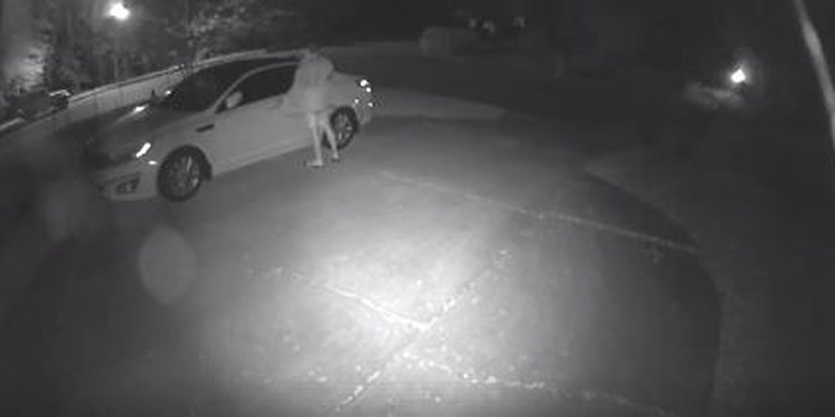 Lee County Sheriff's Office investigates attempted car break-in