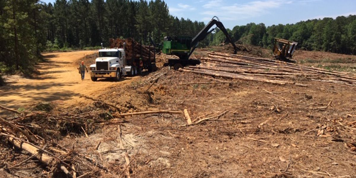 State faces shortage of loggers in the next 10 years