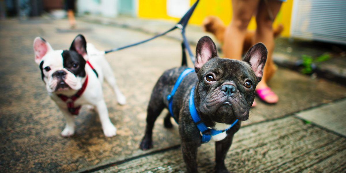 Walmart launches online pet pharmacy and expands vet clinics